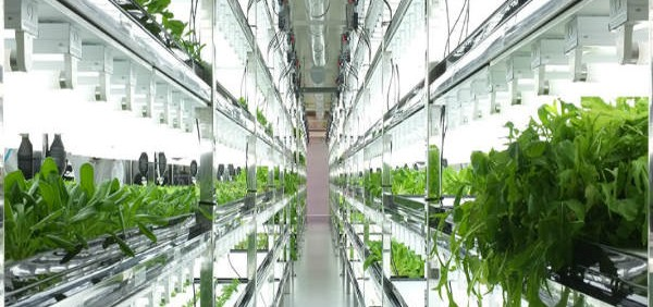 Entrepreneurship as a Career Option And Mechanical Plant Hydroponic